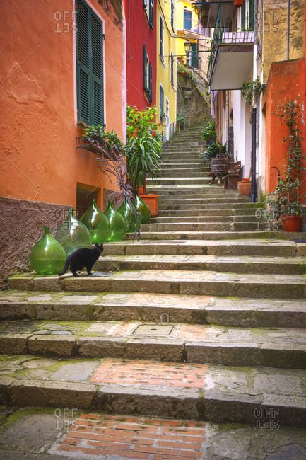 Europe, Italy, Monterosso. Cat on long stairway.