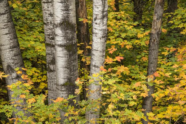 USA, Michigan, Upper Peninsula. Fall colors.