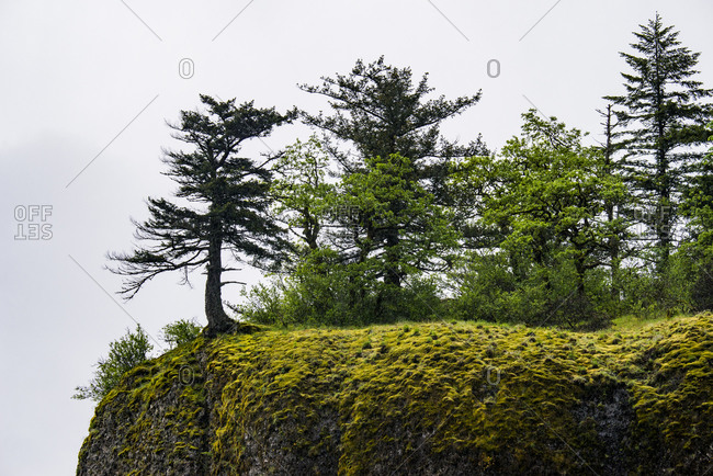 USA, Oregon. Columbia Gorge, conifers on bluff above Oneonta Gorge.