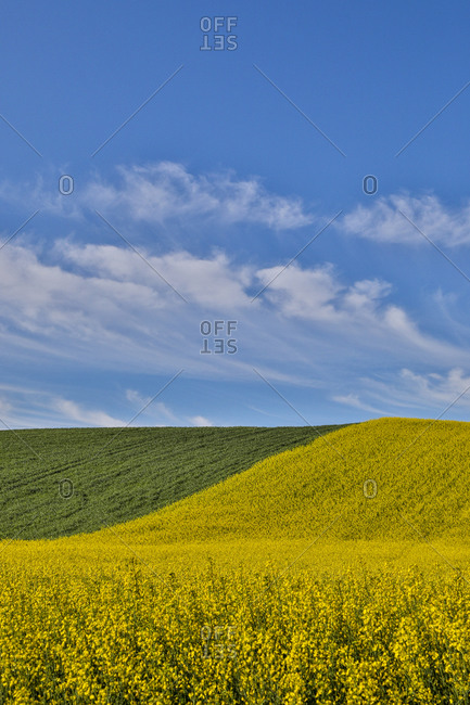 USA, Washington State, Palouse. Rolling hills in the town of Pullman.