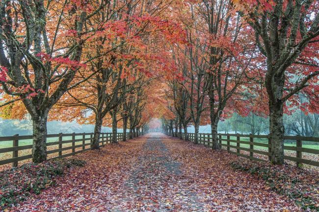 USA, Washington State, Snoqualmie. Autumn country lane.