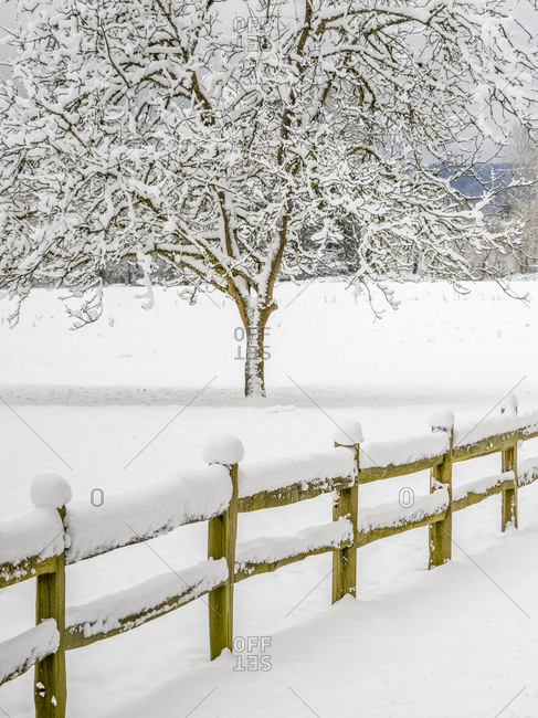 USA, Washington State, Fall City, fresh snow on trees and fence