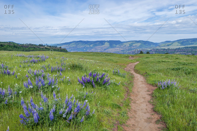 USA, Oregon. Tom McCall Nature Preserve, Rowena Plateau Trail.