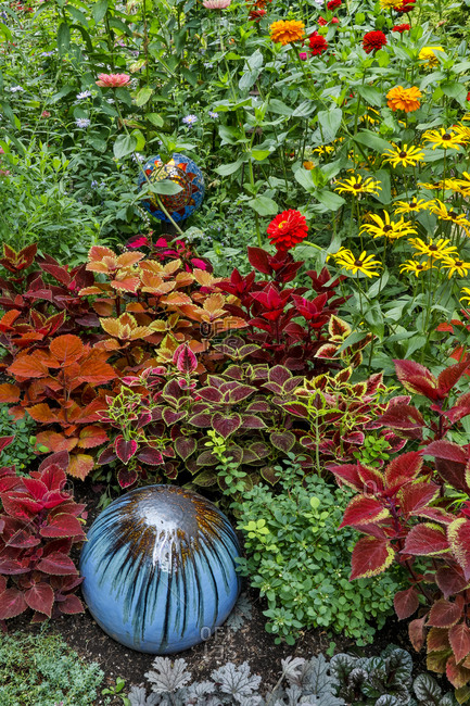 Summer flowers and coleus plants in bronze and reds, Sammamish, Washington State