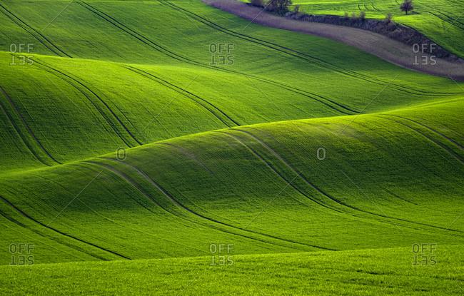 Europe, Czech Republic. Moravia wheat fields.