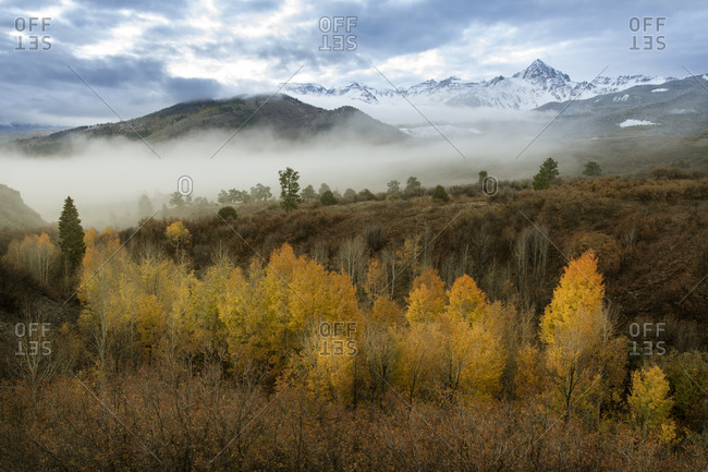 USA, Colorado, San Juan Mountains. Morning fog on mountain and forest landscape.