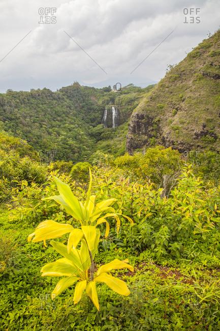 USA, Hawaii, Kauai, Opaeka'a Falls cascading into the tropical forest