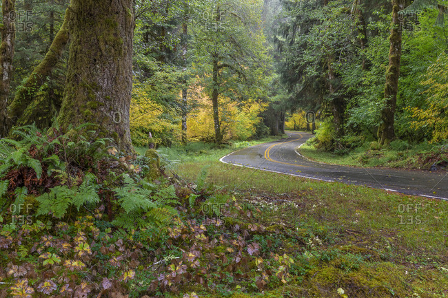 USA, Washington State, Olympic National Park. Road through forest.