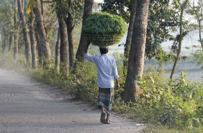 Man carrying a basket of grass on the head, Dhaka, Bangladesh