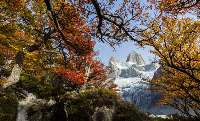 Argentina, Los Glaciares National Park. Mt. Fitz Roy through window of Lenga Beech trees in fall.