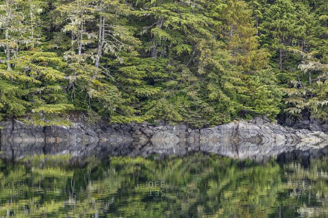 USA, Alaska, Tongass National Forest. Forested shoreline of Chichagof Island.