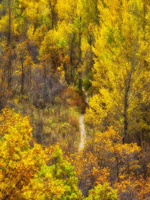 USA, Colorado. Trail through the autumn forest.