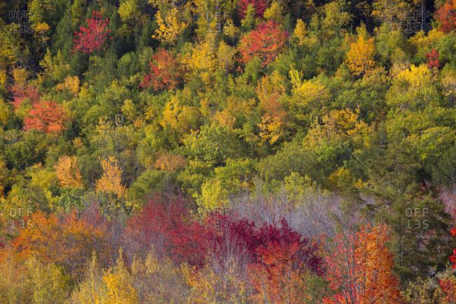 USA, Maine. Fall foliage in Acadia National Park.