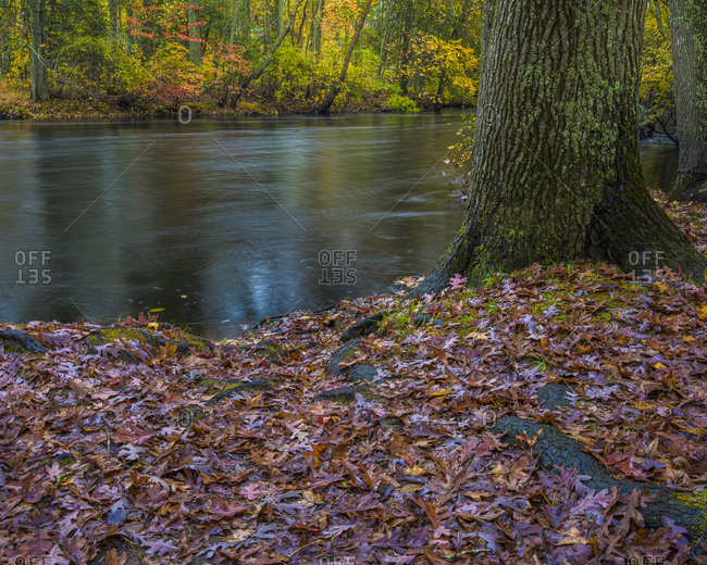USA, New Jersey, Wharton State Forest. River and wet fallen leaves in autumn.