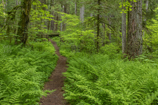 USA, Washington State, Olympic National Forest. South Fork Skokomish River Trail.