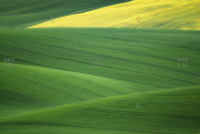 Europe, Czech Republic. Moravia wheat and canola fields.