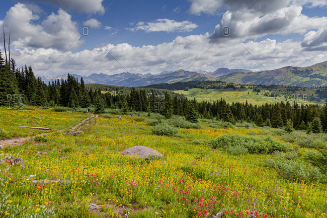 USA, Colorado, Shrine Pass, Vail. Flowery landscape in summer.