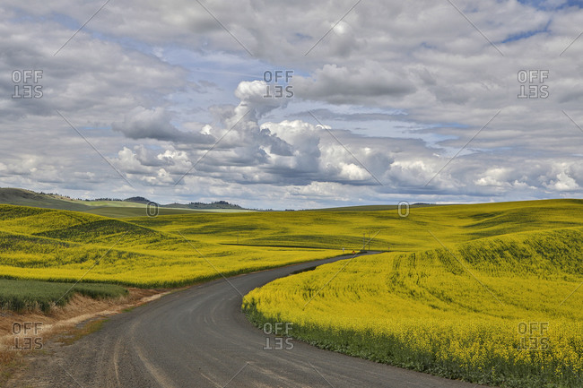 USA, Washington State, Palouse. Road through the canola fields in Pullman.