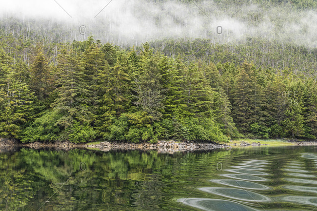USA, Alaska, Tongass National Forest. Boat wake ripples in Mirror Harbor.
