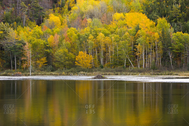 USA, Maine. Fall foliage with reflections at Beaver Dam Pond in Acadia National Park.
