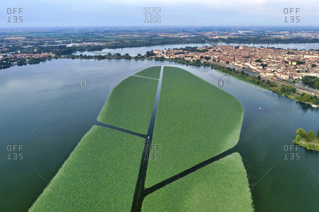 Italy, Mantua, Mantua Lake aerial view, city view, lotus flowers field in the foreground