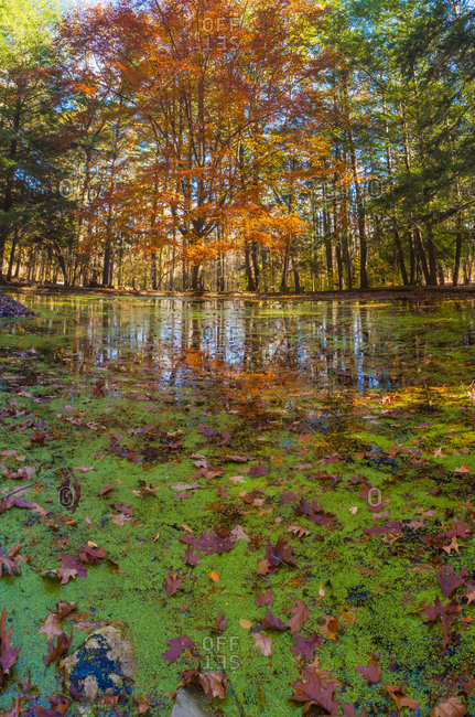 Fall foliage reflection in lake water