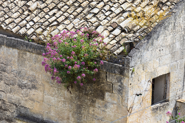 Italy, Basilicata, Province of Matera, Matera. Detail of a building's wall and tile roof with flowers growing in the cracks.