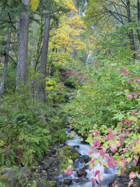 OR, Columbia River Gorge National Scenic Area, Wahkeena Creek