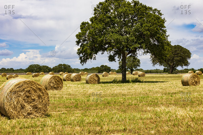 Italy, Apulia, Metropolitan City of Bari, Gioia del Colle. Bales of hay in a field.
