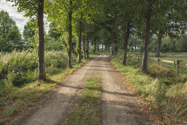 Dirt road in the countryside lined with trees