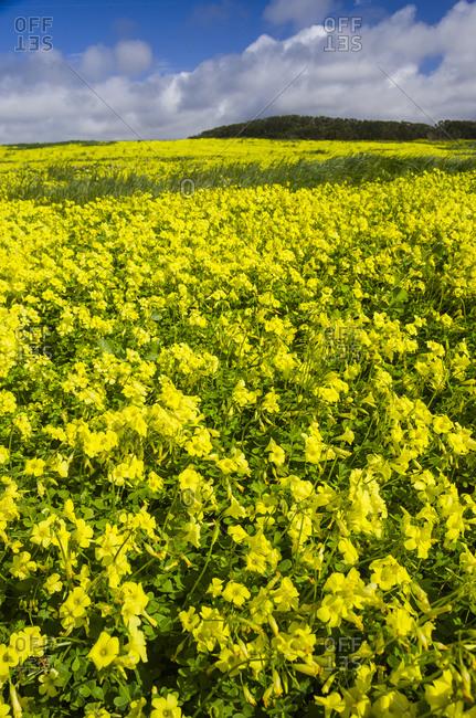 Beautiful field of wild flowers