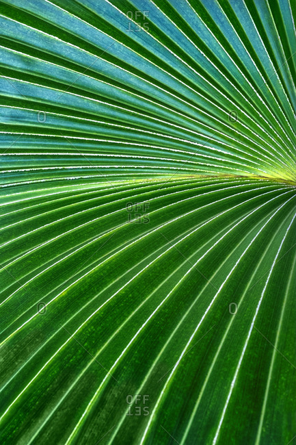 Abstract close-up of Palm frond