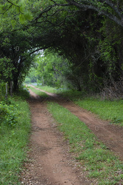 Farm road and pathway with canopy