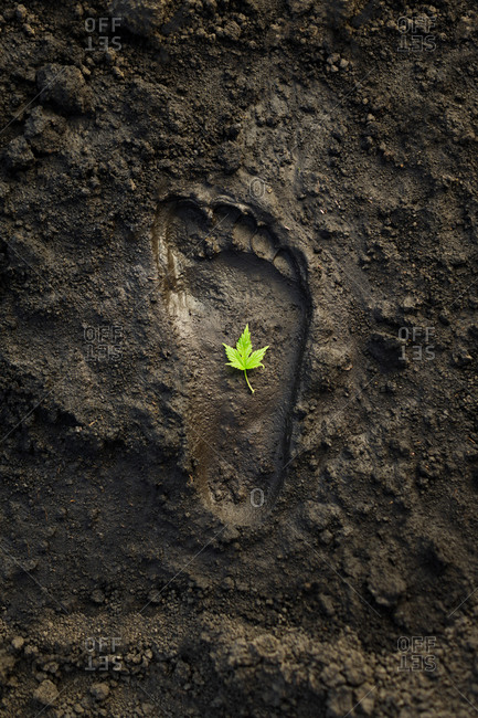 A single green leaf inside a human footprint in the mud