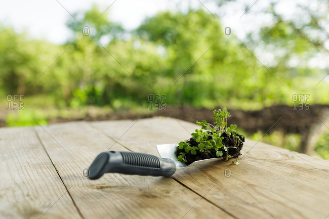 Small shovel filled with fresh plants from a garden