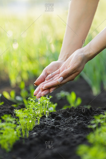 Woman dropping water over plants in a garden with hands