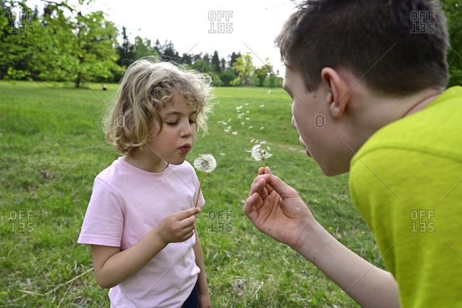 Close-up of siblings blowing dandelion seeds in forest