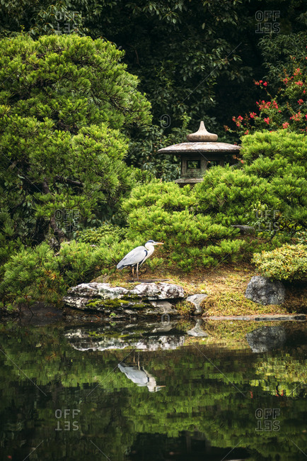 Japan- Kyoto- Heron by pond and stone lantern in Japanese garden