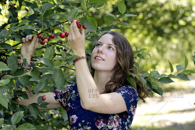 Close-up of young woman picking cherry from plant in farm