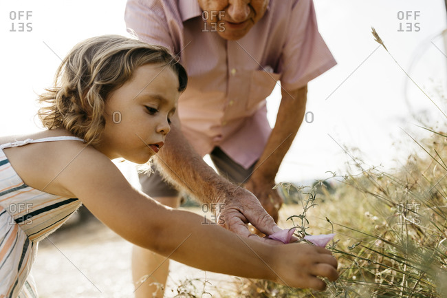 Close-up of cute girl with grandfather picking flowers from plant