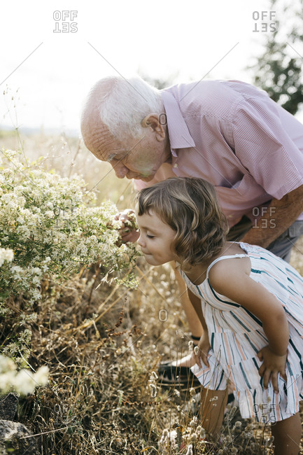 Grandfather with granddaughter smelling flowers in field