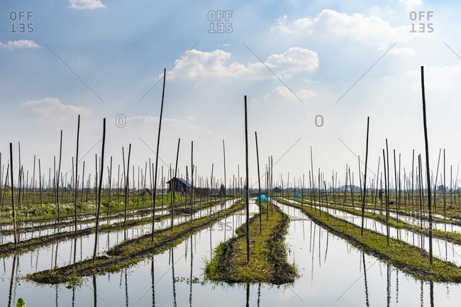 Myanmar- Shan state- Floating gardens on Inle lake