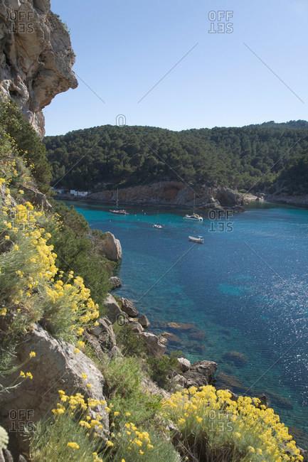 Plants on cliff overlooking ocean