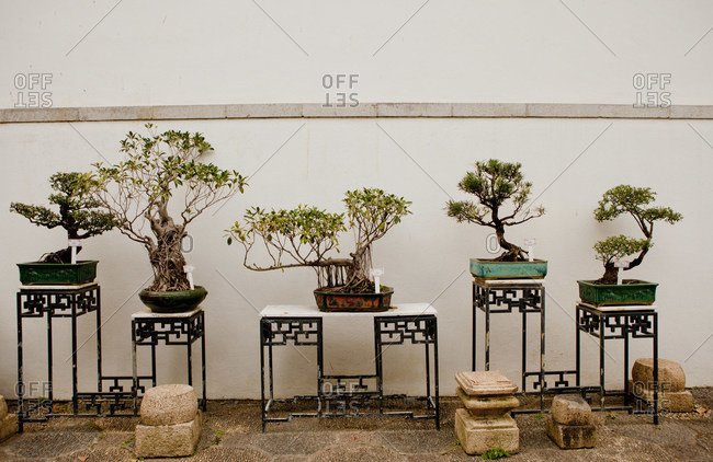 Bonsai, Kowloon walled city, Hong Kong, China