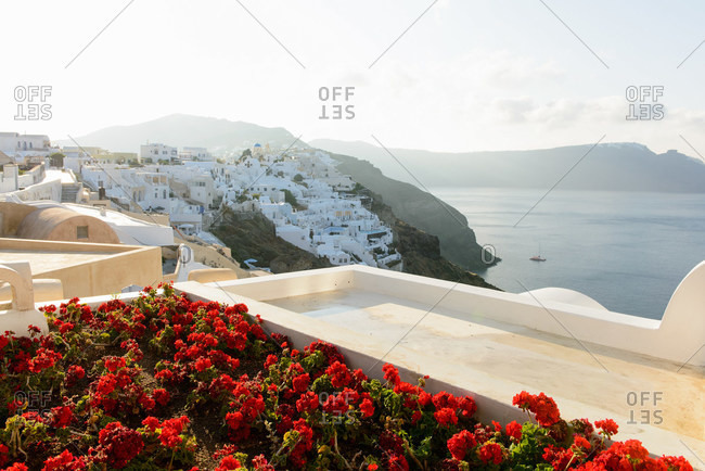 Flower bed, Oia, Santorini, Greece