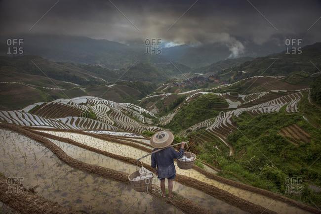 Farmer in terraced field, Longsheng, Guangxi Province, China