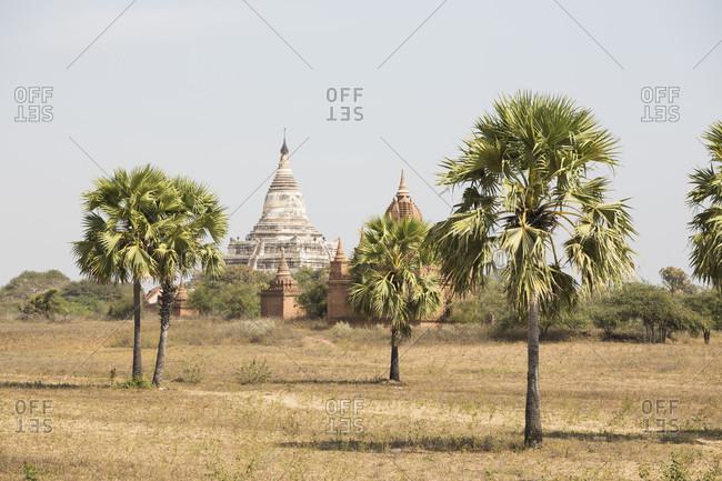 View of palm trees and Shwesandaw pagoda,  Bagan, Mandalay Region, Myanmar