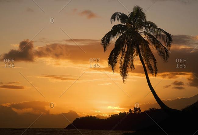 Silhouetted coastal palm tree at sunset, Baracoa, Santiago de Cuba