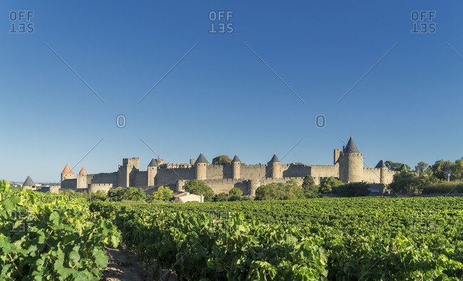 Vineyards and medieval fortified city of Carcassonne, France