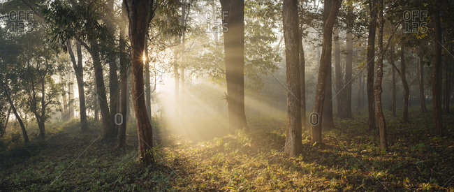 Sunlight shining through trees in forest, Hsipaw, Shan State, Myanmar